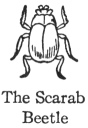 The Scarab Beetle
